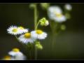 Wildblumen 2