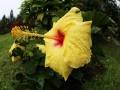 Blüte-15mm