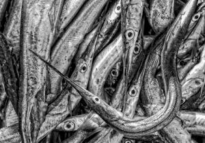 Degenfische - Ernst Hillisch