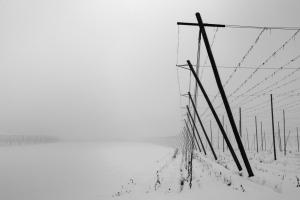 Garten im Nebel - Ünal Cörtük