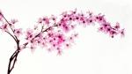 Kirschblüten - Manfred Spies