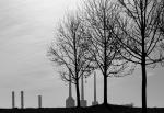 Irisching - Ünal Cörtük