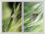Spinnenschoenheit