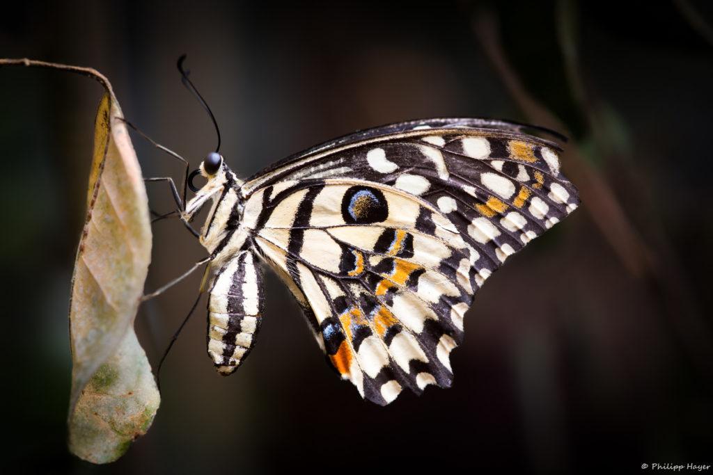 Schmetterlinge auf der Gartenschau